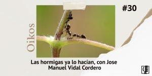 Caratula de Oikos 30 sobre hormigas