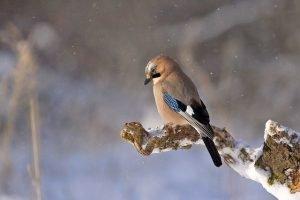 Pájaro sobre rama con nieve