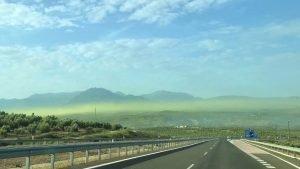 Nube de polen de Olivo sobre olivares de Jaen