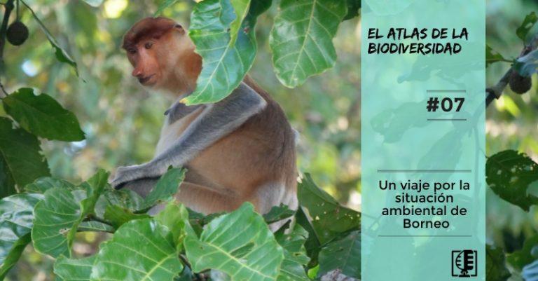 Caratula 7 Podcast sobre Borneo del Atlas de la Biodiversidad