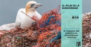 Caratula podcast contaminación por plásticos en el mar