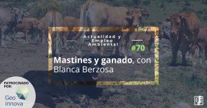 Mastín rodeado de vacas en la cordillera cantábrica (norte de León), a las que protege principalmente del lobo. Fuente: WWF