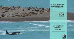 El Atlas de la Biodiversidad 09: De viaje por Península Valdés