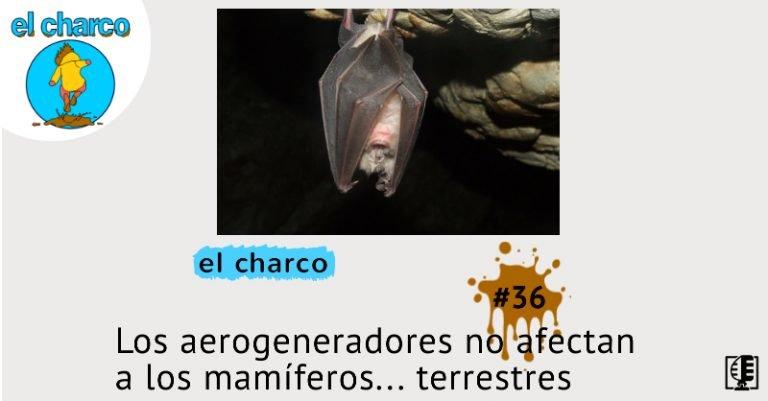 Los aerogeneradores no afectan a los mamíferos… terrestres   el charco #36