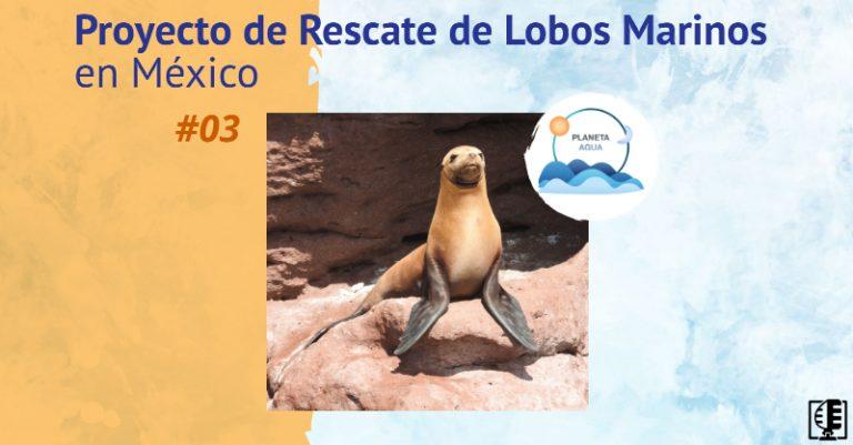 Proyecto de Rescate de Lobos Marinos en México | Planeta Agua #03
