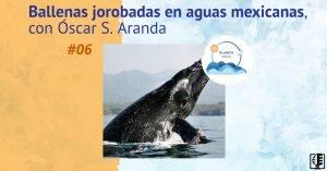Ballenas jorobadas en aguas mexicanas, con Óscar S. Aranda | Planeta Agua #06