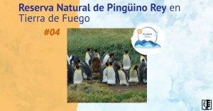 Reserva Natural de Pingüino Rey en Tierra de Fuego | Planeta Agua #04