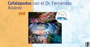 Cefalópodos con el Dr. Fernández Alvárez | #08 Planeta Agua