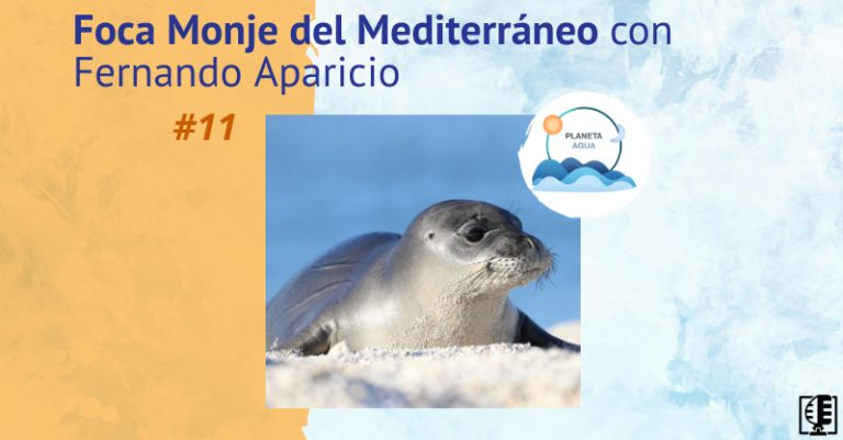 Foca Monje del Mediterráneo con Fernando Aparicio | Planeta Agua #11