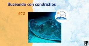 Buceando con condrictios | Planeta Agua #12