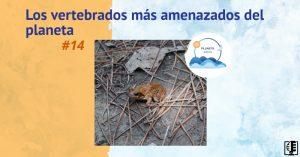 Los vertebrados más amenazados del planeta | Planeta Agua #14