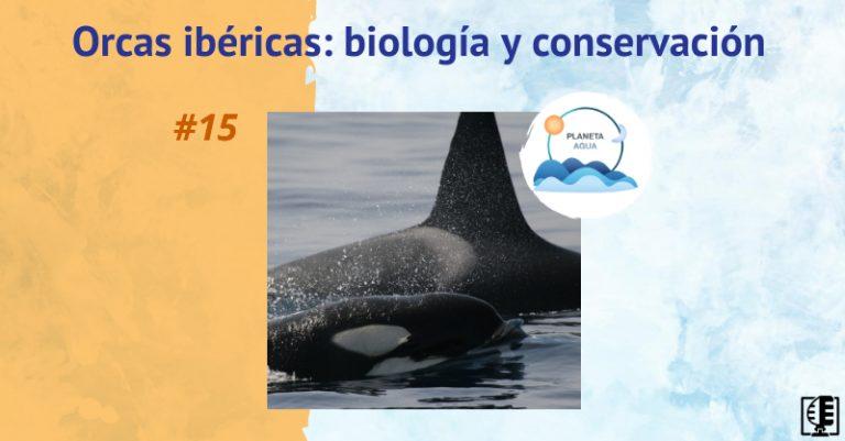 Orcas ibéricas: biología y conservación | Planeta Agua #15