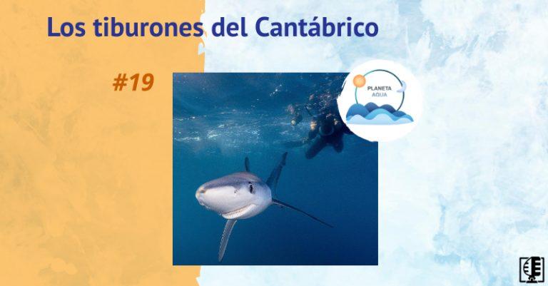 Los tiburones del Cantábrico | Planeta Agua #19