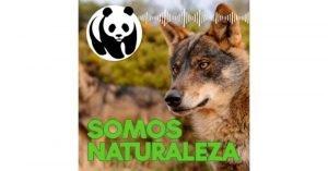 Lobo 🐺 Somos naturaleza. El podcast de WWF España 🐼 #01