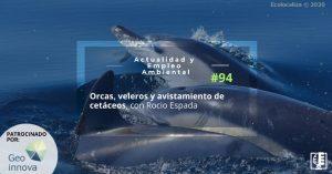 AEAweb94 orcas, veleros y avistamiento de cetáceos