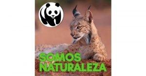 Lince 😸 Somos naturaleza. El podcast de WWF España 🐼 #02